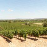 Zoom sur la transaction de domaines viticoles