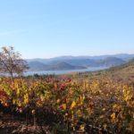 24 heures à Montpellier : hôtels, restaurants et lieux à visiter dans la capitale du Languedoc-Roussillon