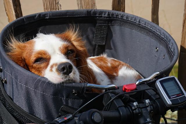 chien dans un panier
