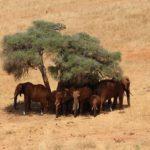 Un voyage culturel sans précédent sur les terres kényanes