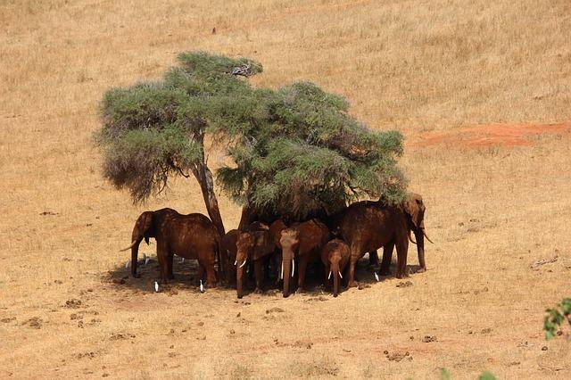 Un voyage culturel sans précédentsur les terres kényanes