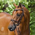 Quel mors pour un jeune cheval