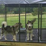 Utiliser un chenil extérieur pour assurer la sécurité de votre chien