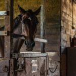 Quel salon du cheval préférez vous?