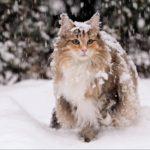 Vous allez adorer ces 3 races de chat!