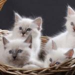 Quels sont les accessoires essentiels pour son chat?