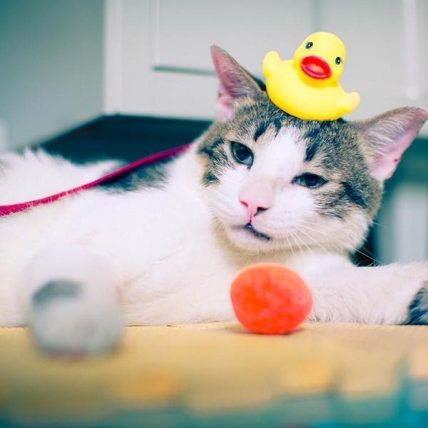Les jouets pour occuper votre chat