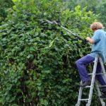 Les avantages d'élaguer les arbres de sa propriété