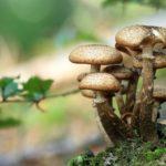 Les champignons au service de la recherche scientifique