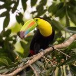 Comment parcourir le Costa-Rica en 4×4 ?