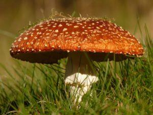 le professeur Didier Raoult, Marseille, les champignons