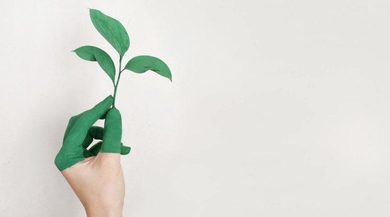 carte de vœux d'entreprise geste écolo