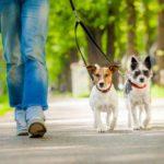 Conseils pour accueillir un chien en appartement