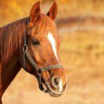 Prendre soin de son cheval: ce qu'il faut savoir
