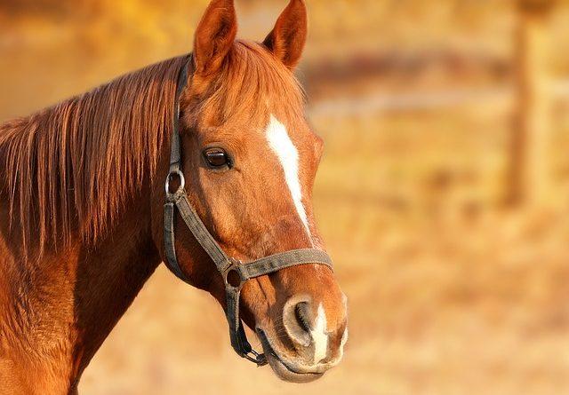 soigner son cheval