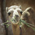 Découvrez La Tunisie dans un voyage guidé : Le plus grand désert du monde