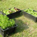 Bacs à plantes : bien choisir le matériau