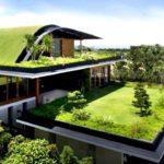Optez pour des toits verts pour une meilleure isolation