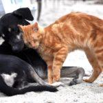 Le traitement des parasites chez votre chien et votre chat