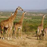 Voyage au Kénya : 6 réponses essentielles sur le visa