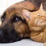 Boutique en ligne d'aliments et d'accessoires pour animaux de compagnie