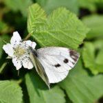 En quoi la pollinisation est nécessaire pour l'homme?