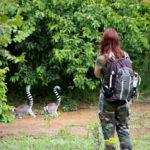 Voyager à Madagascar pour rencontrer des espèces uniques en leur genre
