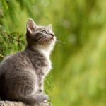 Vie pratique : La chatière électronique, la solution contre les intrusions de chats.