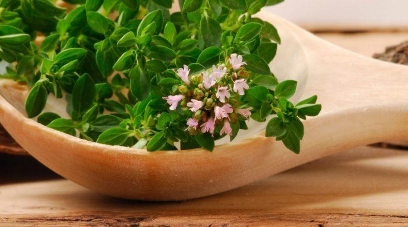 plantes adaptogènes liste