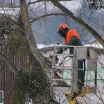 Tout savoir sur l'élagage des arbres