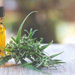 Les avantages de l'huile de CBD