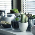 Comment styliser sa maison avec des plantes d'intérieur ?