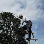 Comment réussir les travaux d'élagage d'arbre?