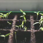 Jardinage : Les budgets à prévoir pour l'entretien d'un jardin