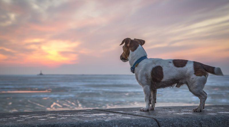 chien perdu soleil