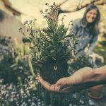 Comment aménager un jardin écologique?