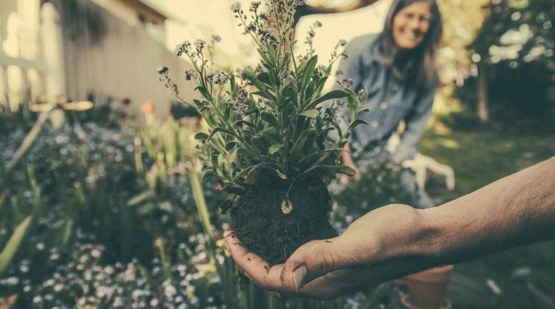 Aménager un jardin écologique