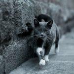 GPS pour chat : La solution contre les fugues ?