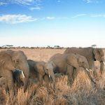 Pourquoi les éléphants sont-ils importants ?