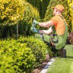 Quelques conseils utiles pour l'entretien de vos plantes